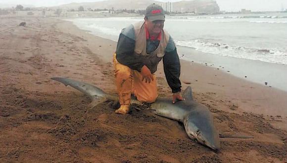 Arica: un tiburón se varó en la playa ¿Qué crees que pasó luego?