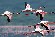 Reserva Nacional de Paracas: el refugio de las aves