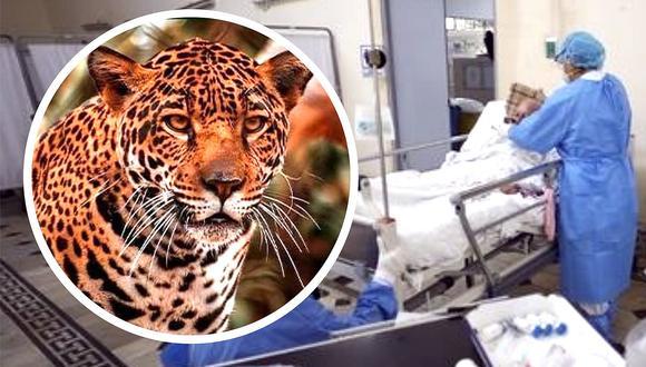 Trabajadora de zoológico pierde brazo tras sufrir ataque de jaguar en Madre de Dios