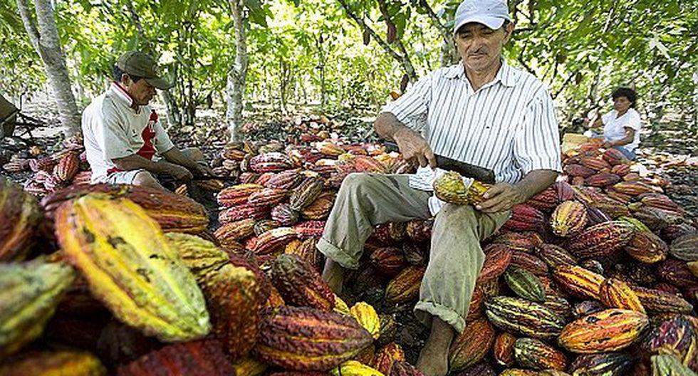 Productores de cacao reactivarán su economía