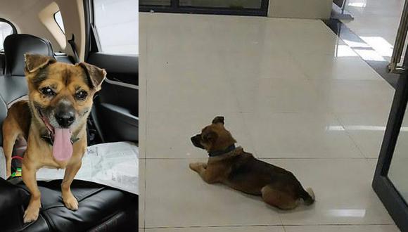 La mascota se mantuvo en la entrada del hospital esperando que salga su dueño (Twitter)