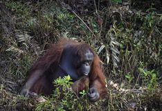 ¿Puedo ayudarte?: La foto de un orangután que tiende la mano para ayudar a un hombre