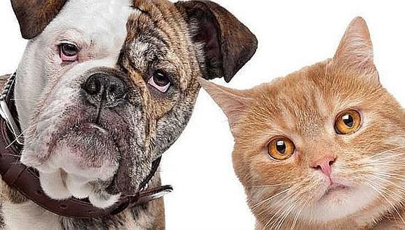 ¿Sabías que las mascotas cumplen un papel espiritual en la vida de los humanos?