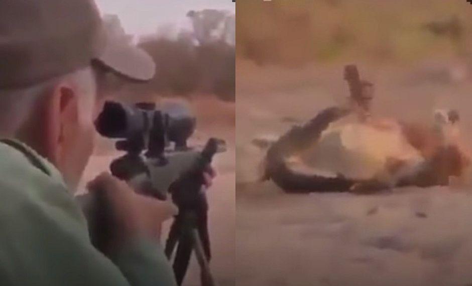 Cazador asesina de un disparo a un león que dormía sin molestar a nadie (VIDEO)