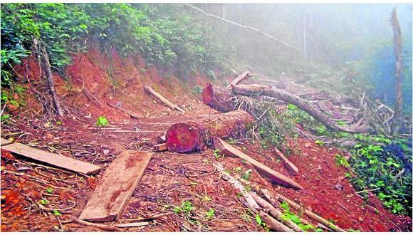 Alarmante: cada hora se pierde 30 hectáreas de bosques