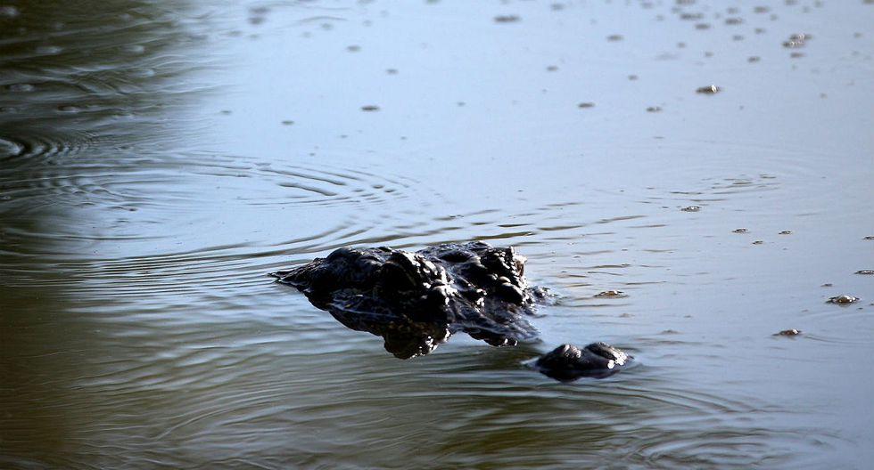 México: Hombre fue atacado por cocodrilo mientras orinaba en laguna
