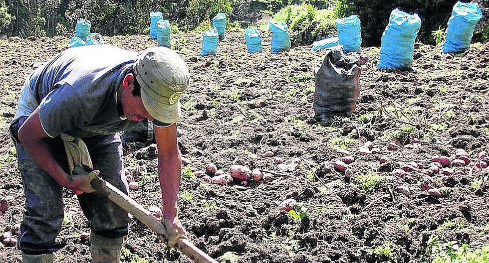Niño Costero: Facilidades crediticias para agricultores se amplían por 7 meses