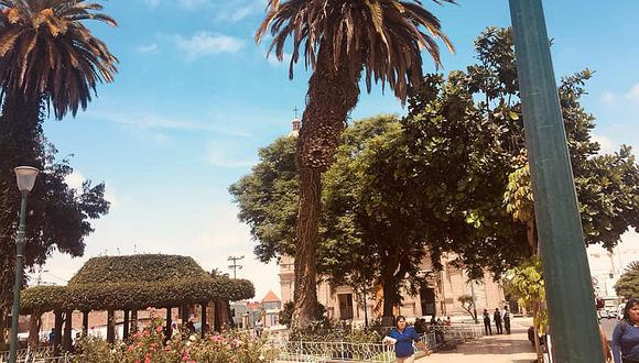 MPT talará palmera doblada en el Paseo Cívico