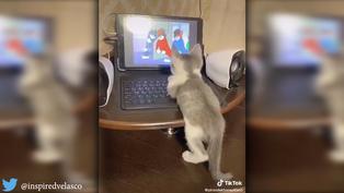 Gatito observa dibujos animados como si fuera un niño