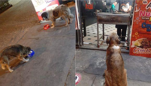 Perros comiendo la comida servida por personal del restaurante.   Foto: Facebook.