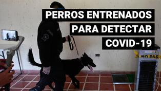 Perros policía en El Salvador son entrenados para detectar casos de coronavirus