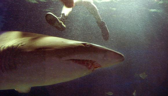 ¿Cuándo se originó el terror a los tiburones?