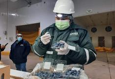 Productores de Ica exportan arándanos a Chile por primera vez