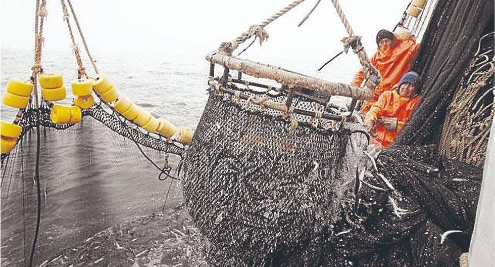 Pesca de anchoveta alcanza el 90% de cuota