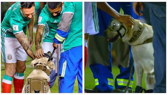 Frida, la perrita rescatista, recibió este homenaje en el México vs Trinidad y Tobago (VIDEO)