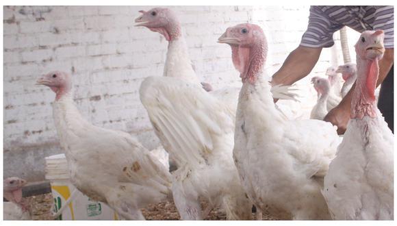 Restringen carne de pavo chilena en Perú por gripe aviar