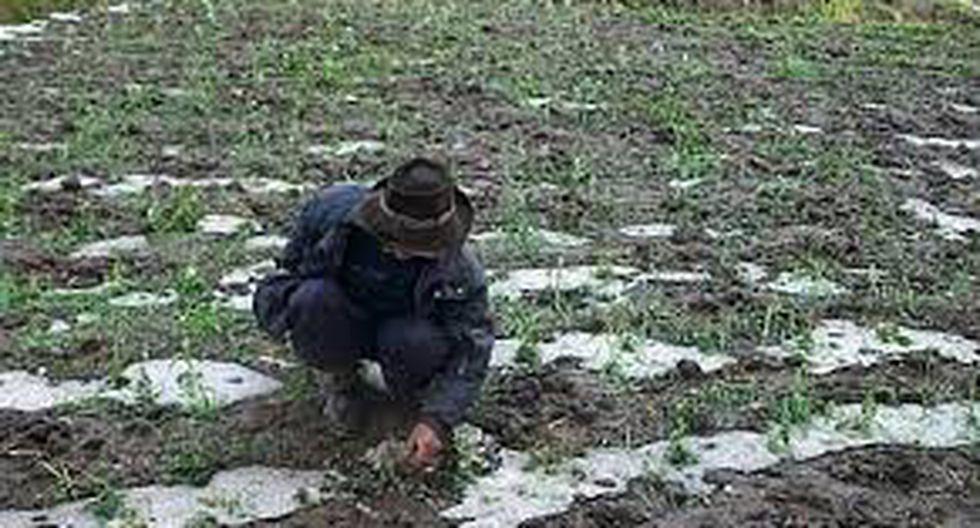 Ayacucho: Granizada y lluvia afecta más de 10 haz de cultivos
