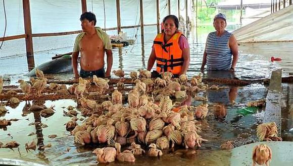 Estas aves ayudaban al granjero a generar ingresos durante la pandemia a causa del COVID-19 (Foto: Gore Madre de Dios)