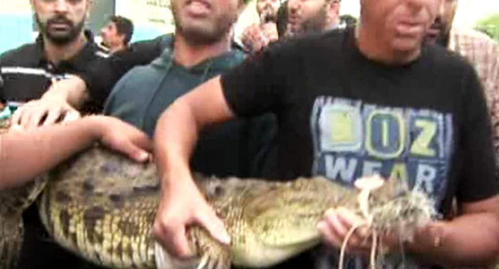 Capturan cocodrilo de 1,7 metros en un desagüe de la franja de Gaza