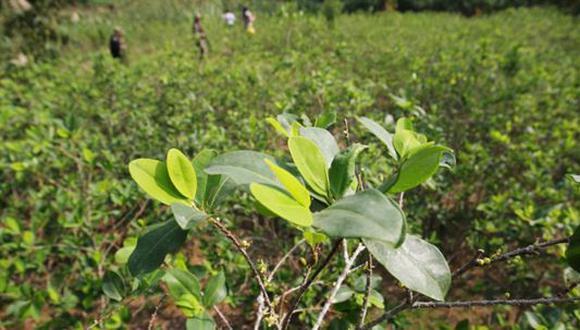 La Casa Blanca estima en 72 000 hectáreas la superficie de cultivos ilícitos de hoja en el país andino y en 704 toneladas métricas su producción de cocaína