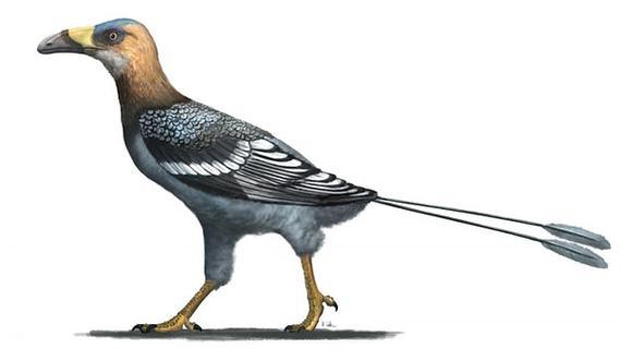 """En Madagascar se ha descubierto un pájaro del tamaño de un cuervo que voló hace 68 millones de años y parecía un tucán en miniatura. Apodado Falcatakely, que significa """"pico de guadaña pequeña"""", tenía un pico curvo y alargado. en la foto, impresión del artista (Foto: AFP)"""