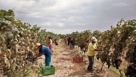 El FAE-Agro solo ha colocado el 2% de su fondo. (Foto: GEC)