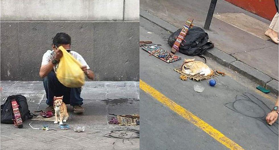 Hombre es acusado de drogar a gatos para utilizarlos como maniquies para vender pulseras