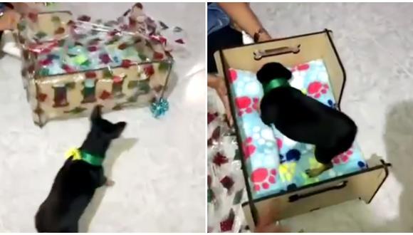 Perrita enternece con su reacción al ver su regalo por Navidad. (Fotos: Tik Tok)