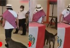 Candidata al Congreso del partido de George Forsyth patea a perro que se cruzó en su camino (VIDEO)
