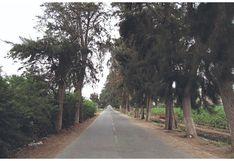 Rama aplasta a obrero y piden talar árboles de ingreso a cementerio