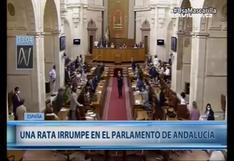 Rata irrumpió en sede del Parlamento de Andalucía y asustó a legisladores (VIDEO)
