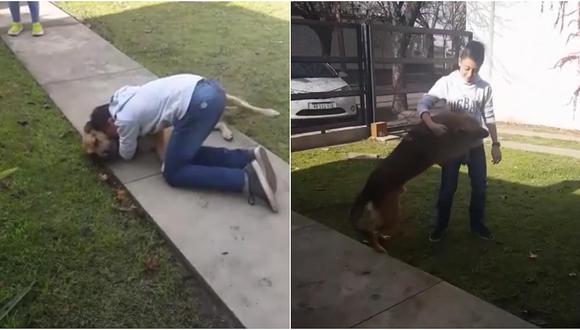 Facebook: el conmovedor reencuentro de un niño con su perro que se había perdido (VIDEO)