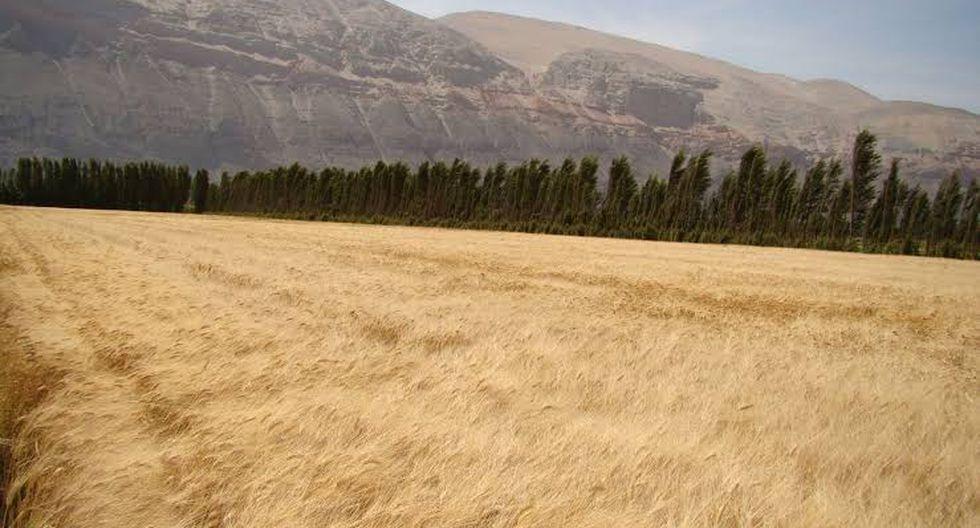 Calentamiento global impacta en producción de Perú/ Foto: Andina