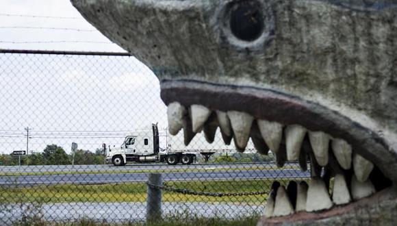 EEUU: Niño de 12 años pesca tiburón de 2,5 metros
