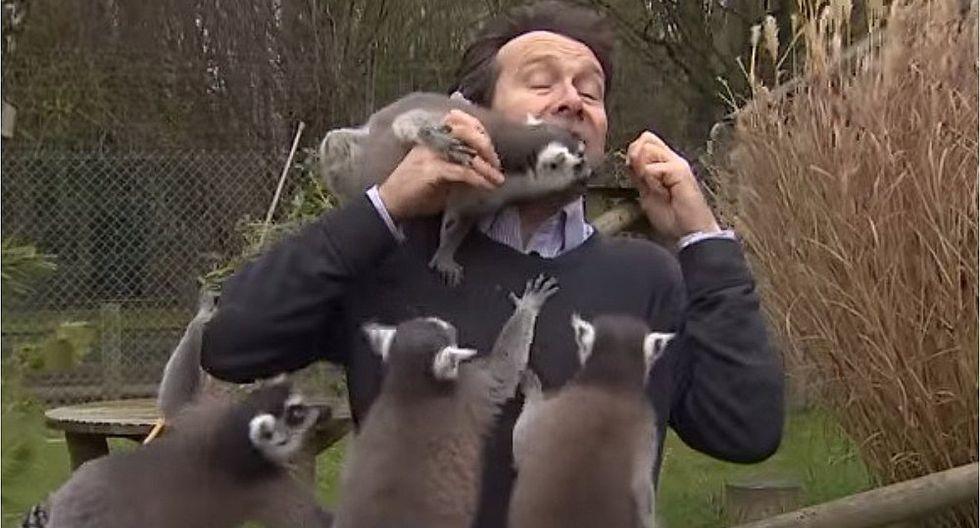 Lémures hicieron pasar mal momento a periodista durante reportaje (VIDEO)