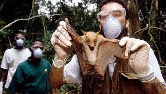 Investigadores chinos encuentran lotes de nuevos coronavirus en murciélagos. (Foto referencial: Science Photo Library)