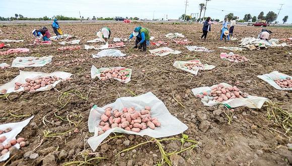 En Arequipa darán movilidad para vender cosecha de papa del valle de Tambo