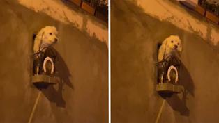 Bolivia: Se vuelve viral el balcón personalizado de perrita creada por sus dueños