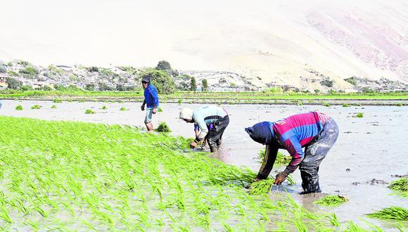 En Arequipa lluvias dañaron dos mil hectáreas de cultivo