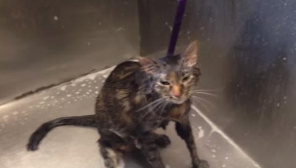 """VIDEO: Gato """"habla"""" al """"suplicar"""" que ya no lo bañen"""