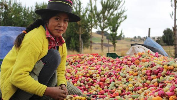 """""""Son más de 711 mil familias que producen más de 3,250 variedades de papa en los andes peruanos. Familias portadoras de un legado de más de 8 mil años de historia de domesticación y resiliencia"""", indica Andrés Ugaz de cocinapar.org"""