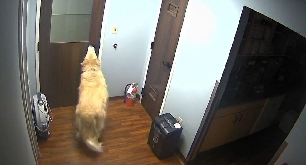 Cámaras grabaron espectacular fuga de perro de refugio