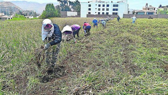 El cambio en el sector agrario depende del Estado y los hombres de campo