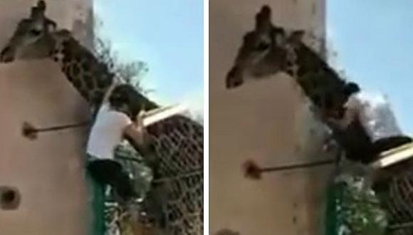 Hombre en estado de ebriedad se subió al cuello de una jirafa en zoológico (VIDEO)