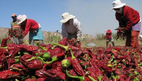 Nuevo texto sustitutorio establece una Bonificación Especial por Trabajo Agrario (BETA) de 30% de la Remuneración Mínima Vital (RMV), que en la actualidad suma S/ 279. El bono no tiene carácter remunerativo. (Foto: GEC)