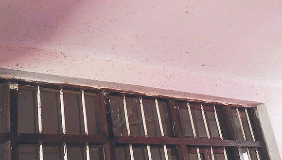 Urge fumigar en 43 colegios por zancudos