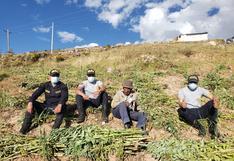 Policías dejan patrullaje para ayudar a cosechar chacra de anciano de 82 años