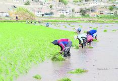 Arequipa: caudal del río Tambo aún no disminuye