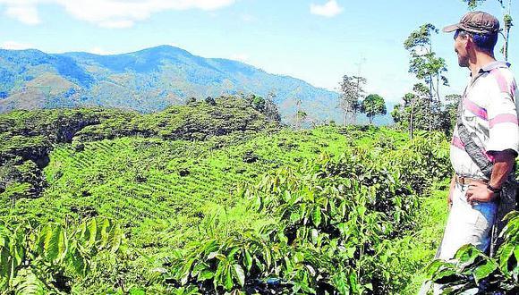 Bosque Modelo Pichanaki busca manejo forestal y corredores biológicos