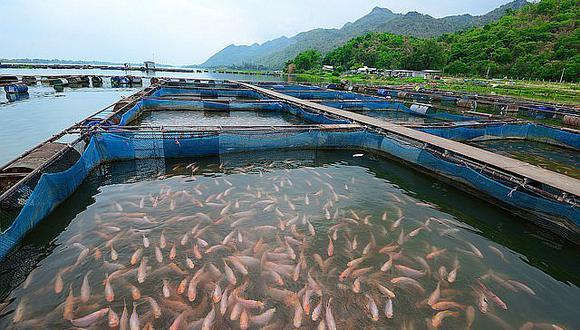 SNI: Reducción tributaria permitirá que la acuicultura crezca a doble dígito en 2019